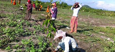 PlantingMangoTrees1_milestones